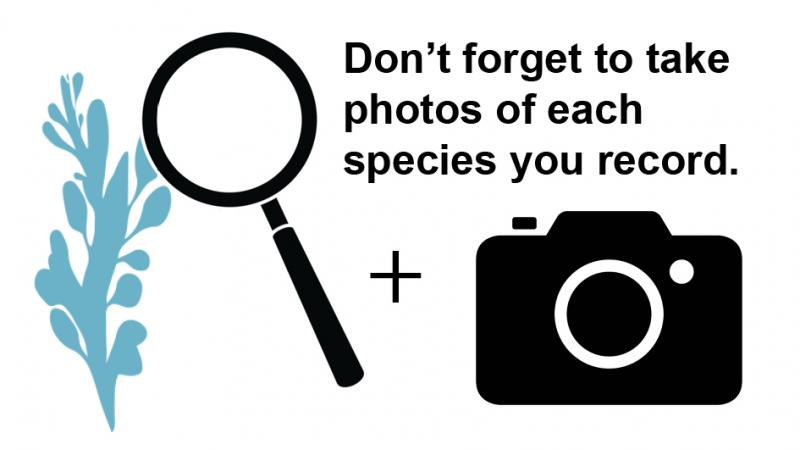 Don't forget to photograph each seaweed you record